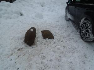 厳冬期のエゾシカに対する給餌