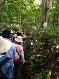 渡辺ガイドに続き森を探索