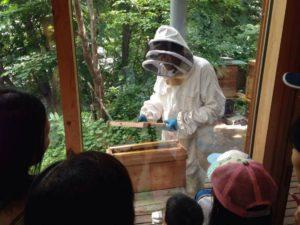 巣箱から蜂の巣を取り出します
