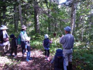 森を探索中